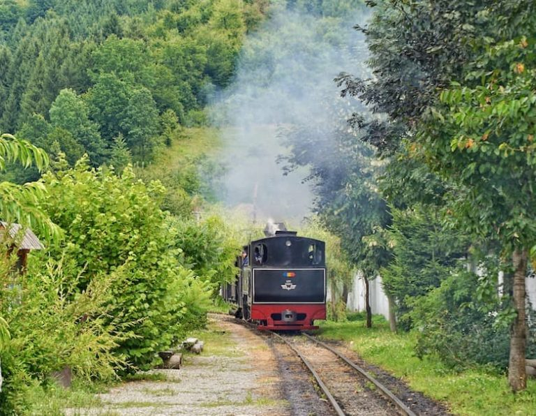 Steam train in MAramures