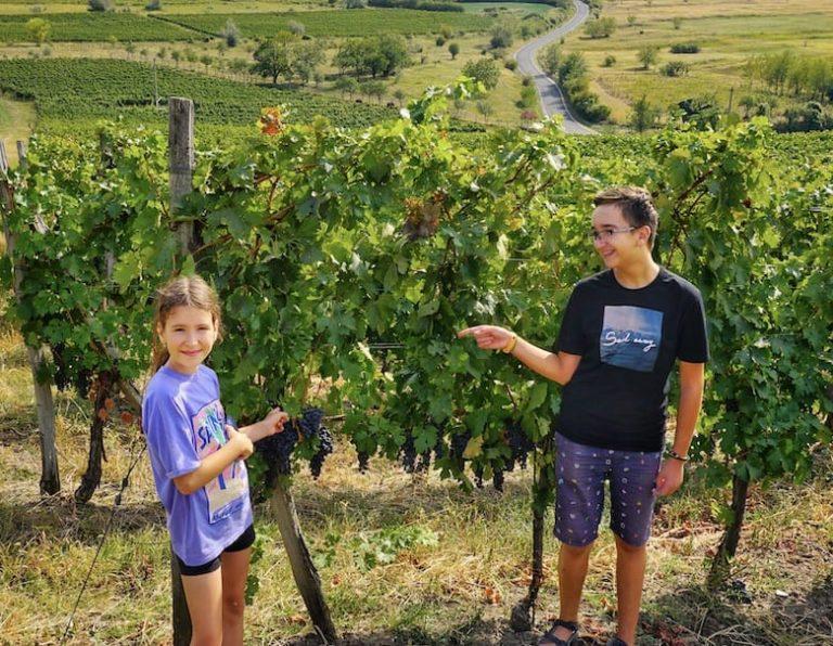 Wine tasting in Dealu Mare vineyard